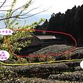 山中茗茶1.jpg