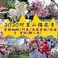 2020阿里山櫻花季懶人包.jpg