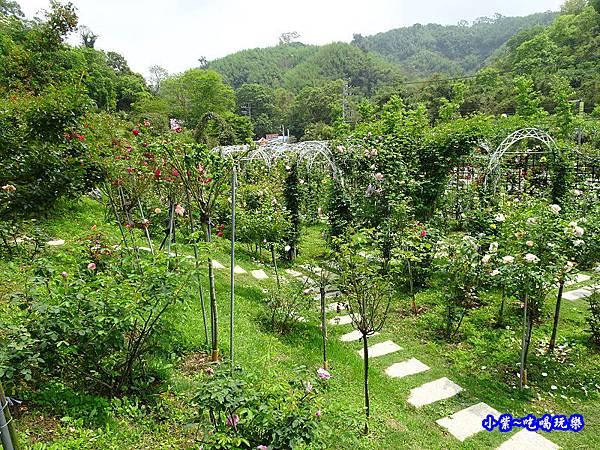 苗栗-雅聞七里香玫瑰森林 (17).jpg