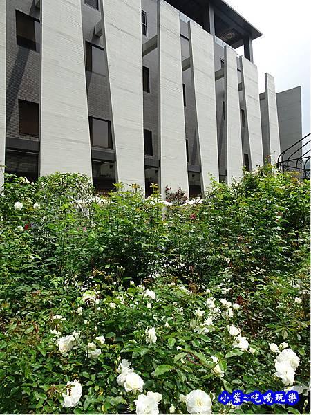 苗栗-雅聞七里香玫瑰森林2.jpg