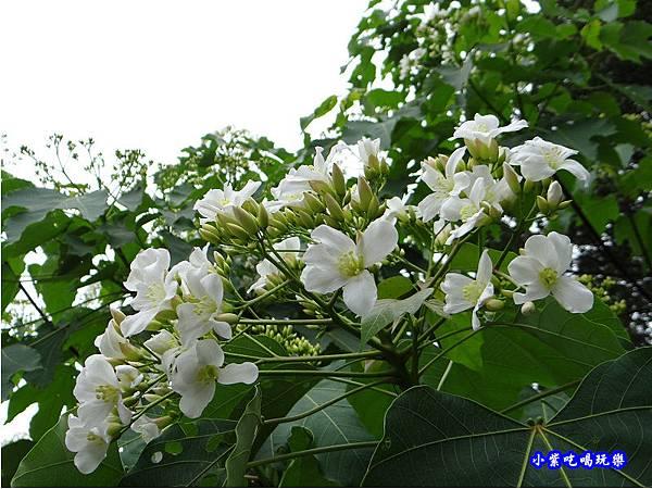 新竹-金獅步道9.jpg