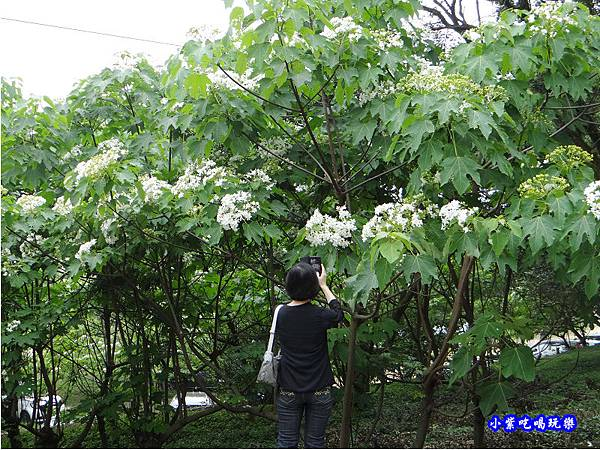 新竹-金獅步道15.jpg