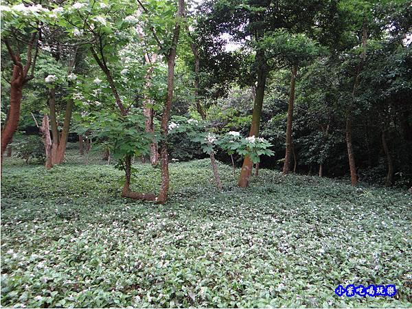 新竹-金獅步道16.jpg