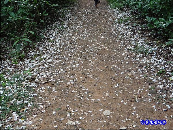 新竹-金獅步道18.jpg