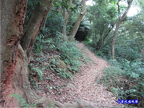 新竹-金獅步道21.jpg