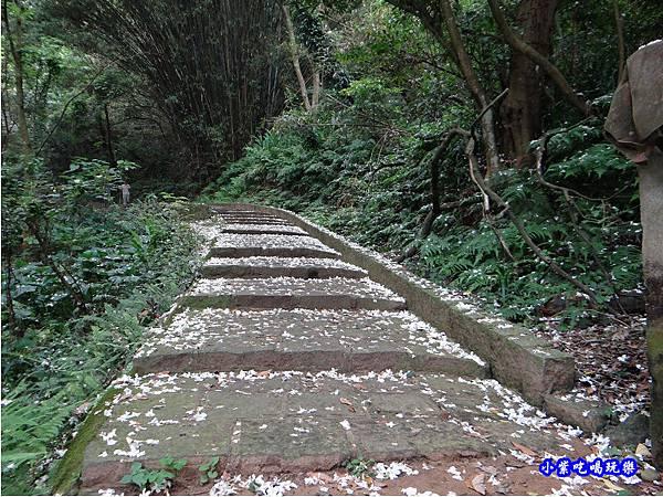新竹-金獅步道29.jpg