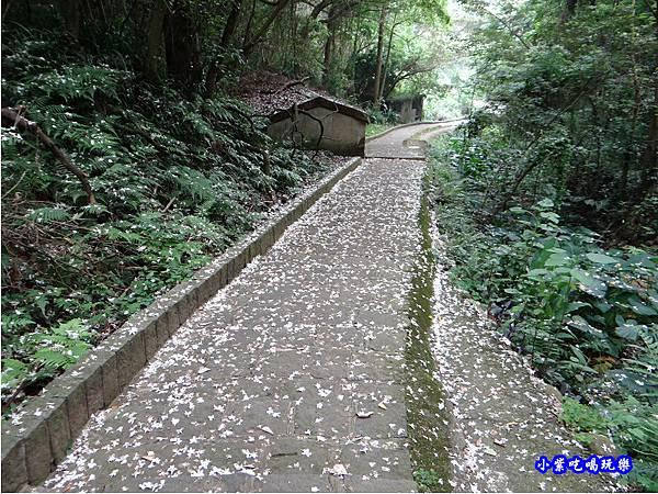 新竹-金獅步道32.jpg