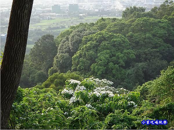 新竹-金獅步道40.jpg