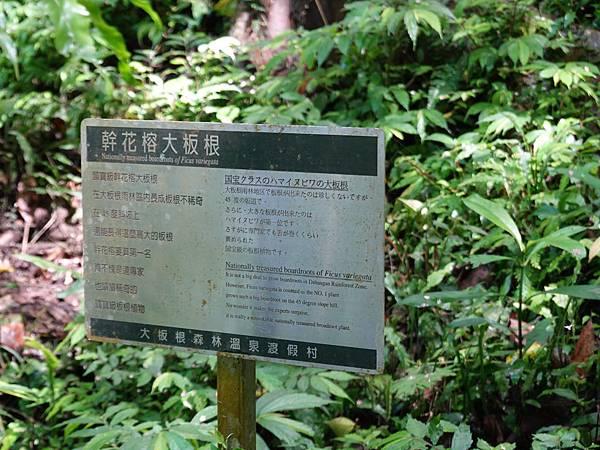 一環步道-幹花榕大板根-大板根森林溫泉酒店 (2).JPG