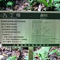 編號17-九丁榕-大板根森林步道 (4).JPG