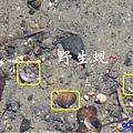 苑裡牡丹蓮池旁水溝 (2).jpg
