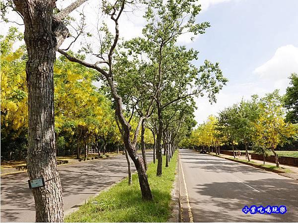 台中-都會園路-盛開阿勃勒17.jpg