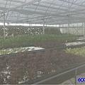 網室蔬菜區-綠意山莊 (1).jpg