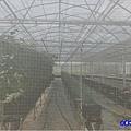 網室蔬菜區-綠意山莊 (3).jpg