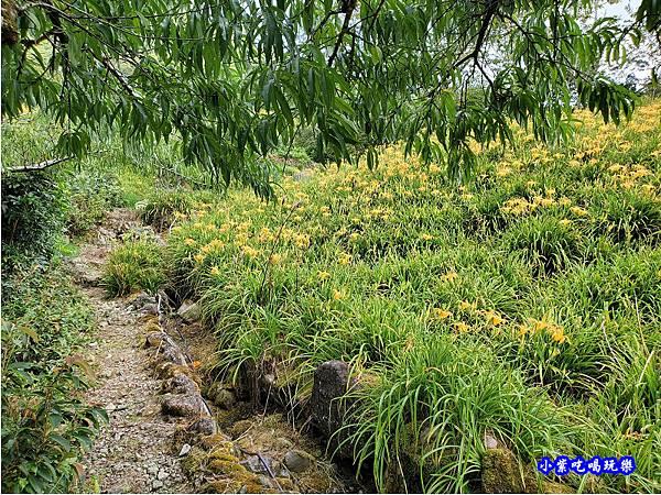 赤科山-黎明農園  (4).jpg