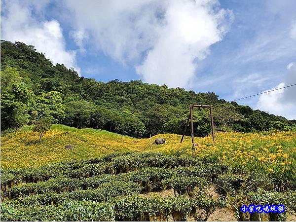 赤科山-黎明農園  (5).jpg