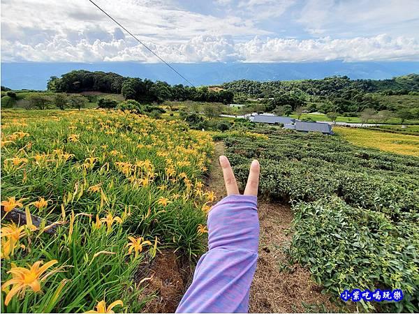 赤科山-黎明農園  (6).jpg