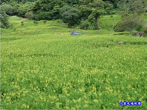 赤科山-黎明農園  (14).jpg