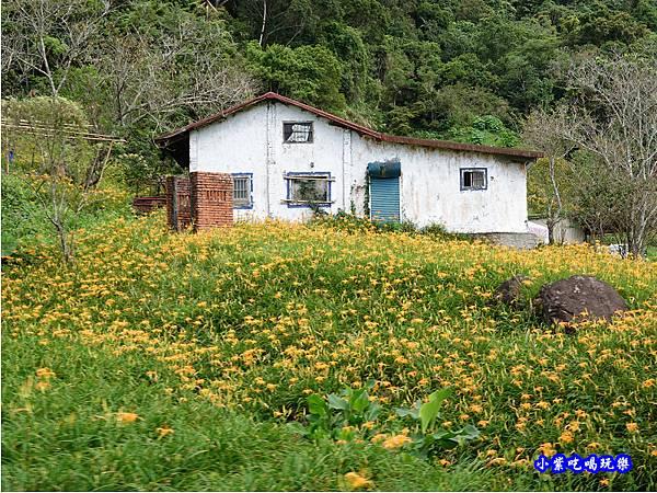 赤科山-黎明農園  (13).jpg