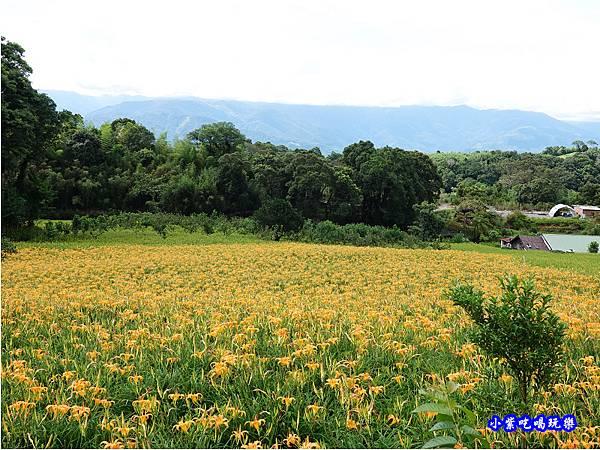 赤科山-黎明農園  (17).jpg
