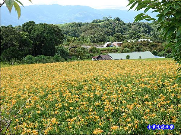 赤科山-黎明農園  (16).jpg