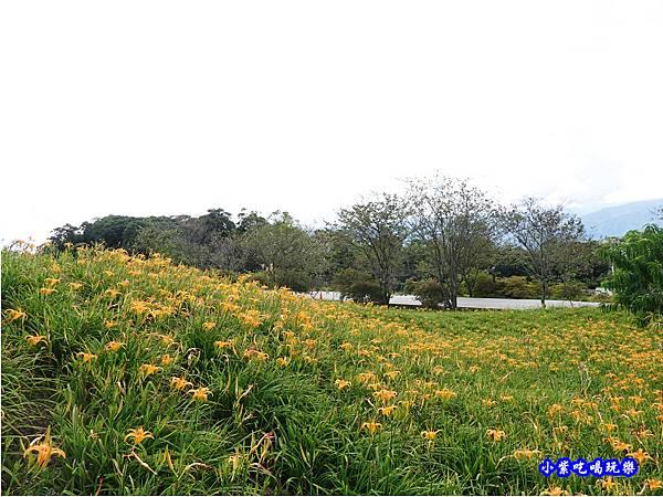 赤科山-黎明農園  (34).jpg