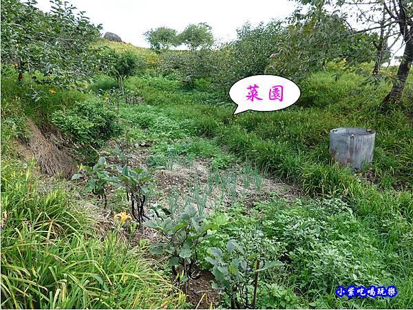 赤科山-黎明農園  (35).jpg