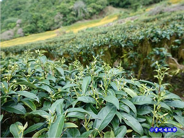 赤科山-黎明農園  (36).jpg