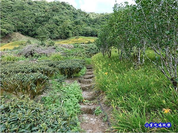 赤科山-黎明農園  (37).jpg