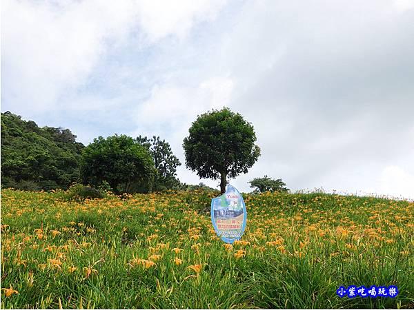 赤科山-黎明農園  (39).jpg