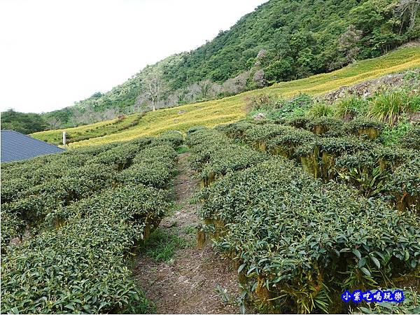 赤科山-黎明農園  (38).jpg