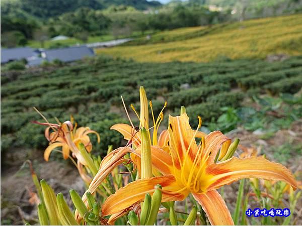 赤科山-黎明農園  (44).jpg