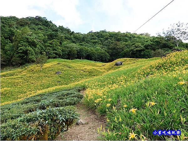 赤科山-黎明農園  (43).jpg