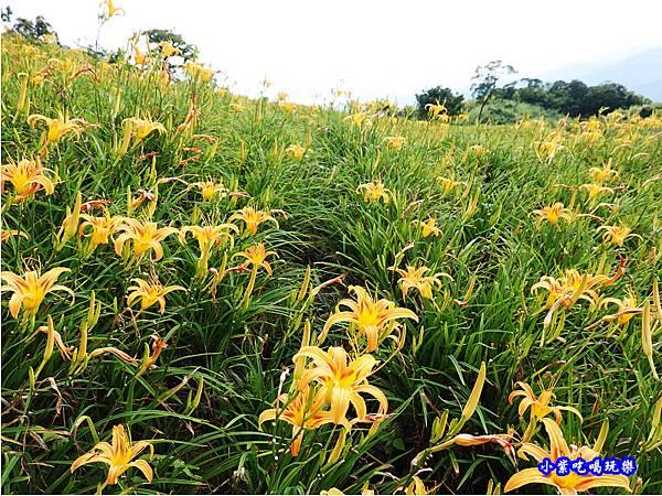 赤科山-黎明農園  (42).jpg