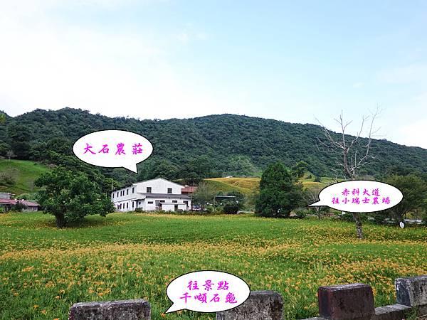 大石農莊周邊金針花.jpg