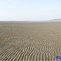 新竹香山-海山漁港濕地 (3).jpg