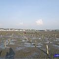 新竹香山-海山漁港濕地 (11).jpg