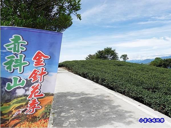 森活家農莊-赤科山金針花 (11).jpg