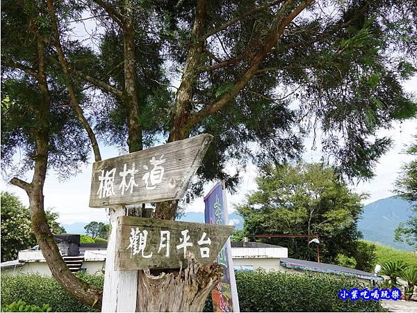 森活家農莊-赤科山金針花 (8).jpg
