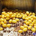 10元素食地瓜球-清水五權夜市 (2).jpg