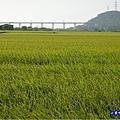 2020-10月外埔忘憂谷 (31).jpg