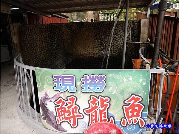 現撈鱘龍魚-山雞城庭園餐廳.jpg