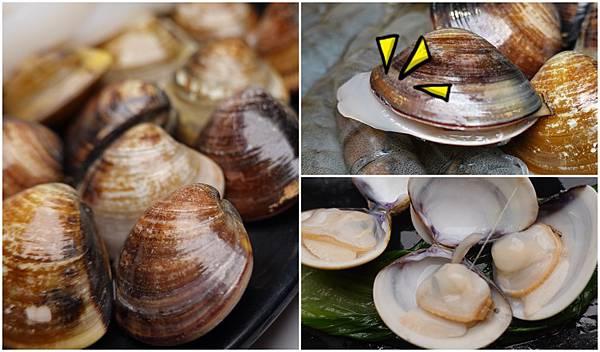 活蛤蜊-連進酸菜白肉鍋吃到飽.jpg