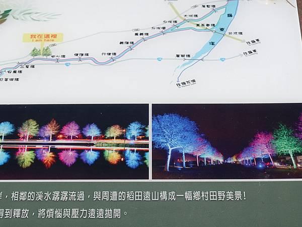三星-安農溪落羽松秘境  (5).JPG