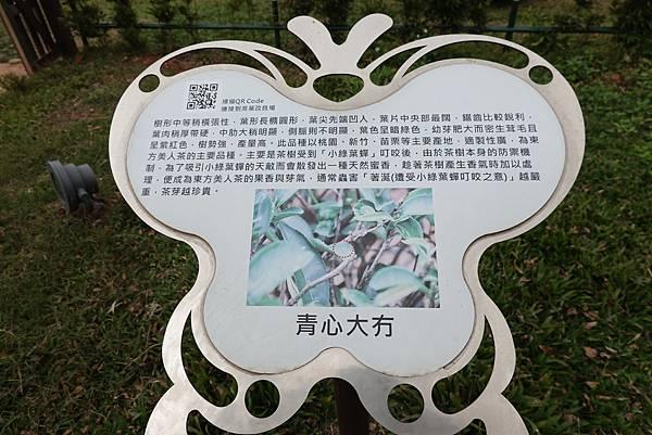 小綠葉蟬-八甲茶園.JPG