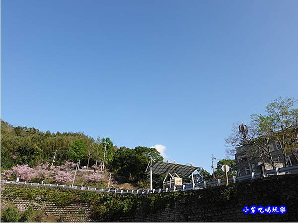 拉拉山旅遊服務中心櫻花季 (12).jpg
