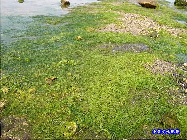 左邊潮間帶-馬崗漁港 (8).jpg
