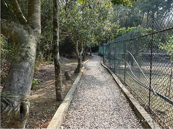 羅浮遊客中心後方往義興吊橋步道 (2).jpg