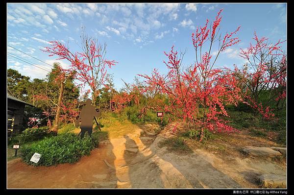 黃昏時刻的櫻花台, 是一種不一樣的感覺