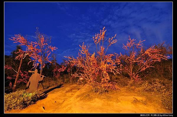 櫻花台不論在白天在夜晚, 都有迷人的魅力